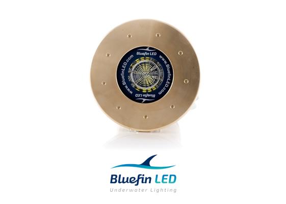 bluefinled underwater light great white